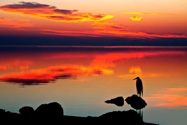 """Heron Sunrise"""