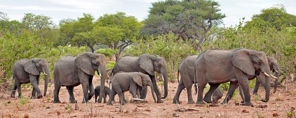 """""""Elephant Parade"""""""