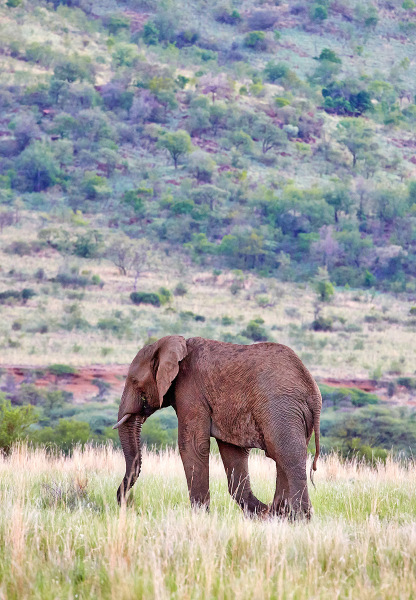 """Lone Elephant"""