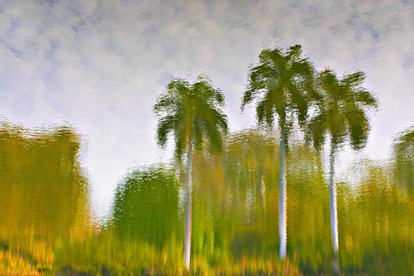 """Palm Reflection"""