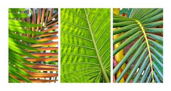 """Tropical Leaves"""