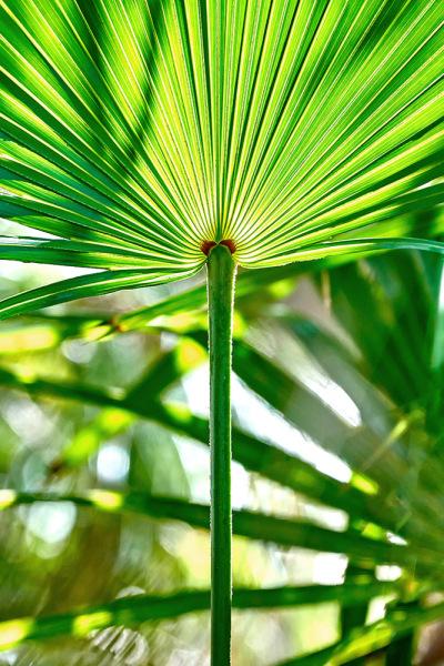 Palm Shapes