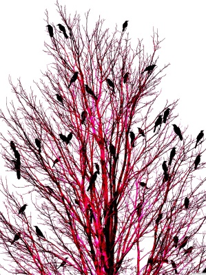 BIRDS  OF  TEXAS  -  RED