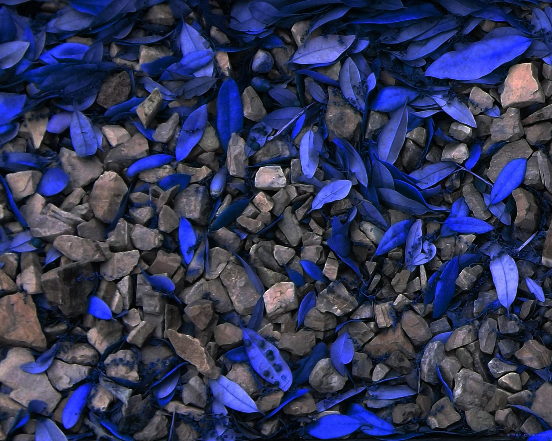 ROCK  'N  BLUES