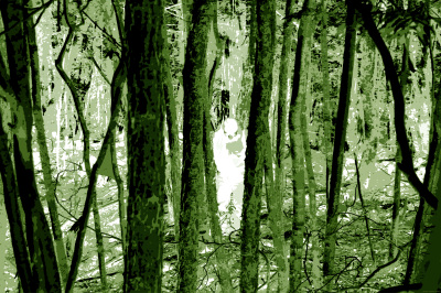 GHOST  IN  THE AOKIGAHARA  FOREST