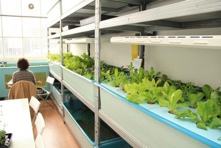 Επιχειρηματικές ιδέες: Εμπορικό κατάστημα μετατρέπεται σε φάρμα!