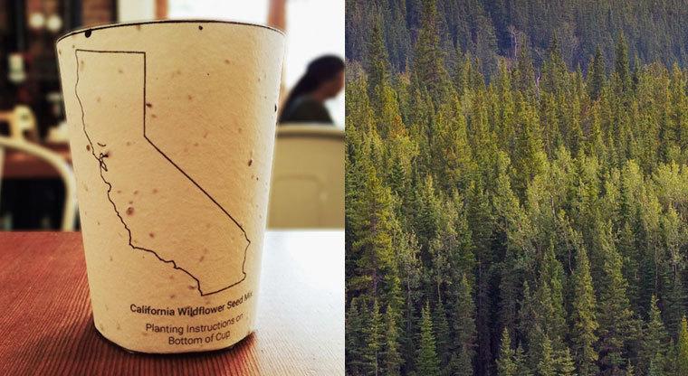 Επιχειρηματικές ιδέες: Βιοδιασπώμενη κούπα για καφέ εμποτισμένη με σπόρους!