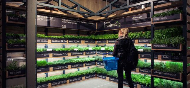 Επιχειρηματικές ιδέες: Τώρα τα λαχανικά συλλέγονται μέσα στα σουπερμάρκετ!