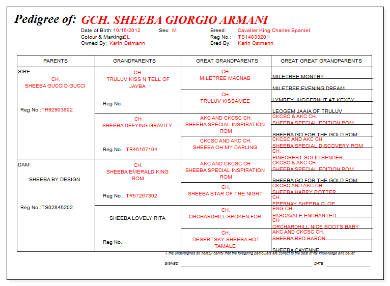 GCH Sheeba Giorgio Armani Pedigree