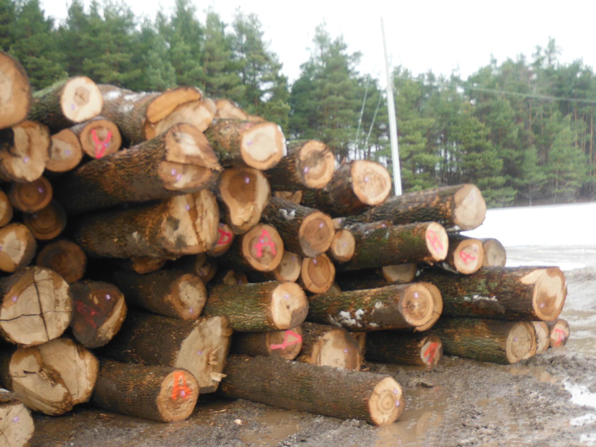 Ash Saw Logs