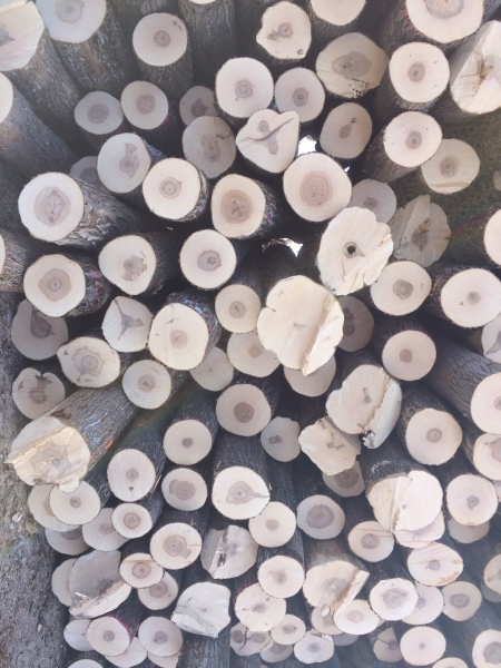 Hard Maple Sawlogs