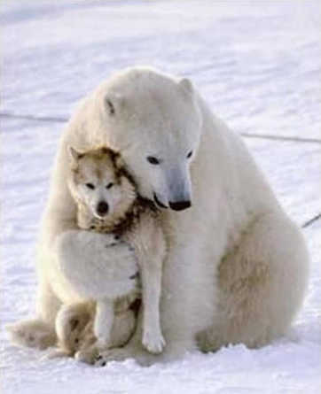 Bear and Wolf, Truth, Freedom, Love, Nature, Compassion, Empathy, Warmth