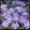 Flower Gardens