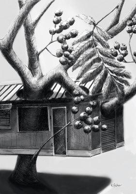 Oren's Rowan Tree