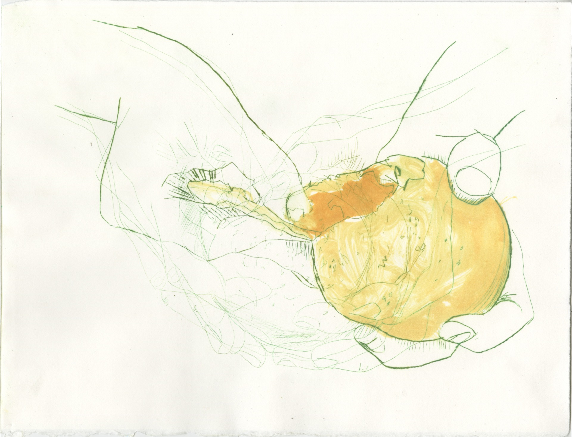 peeling of an orange (stage 5 of 9)