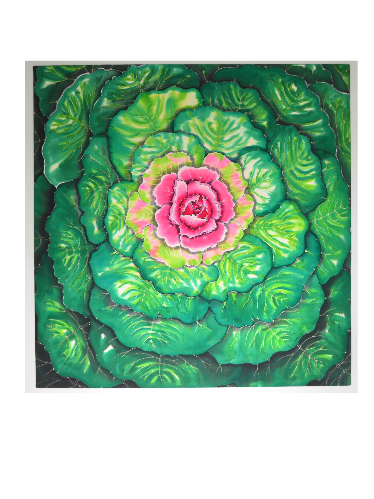 "Big Green Cabbage 50""x 50"""