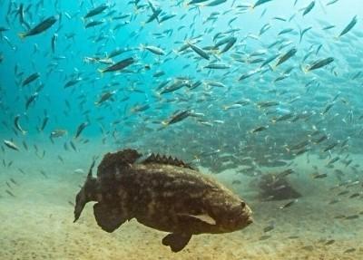 Grouper fishing at Keaton Beach Florida
