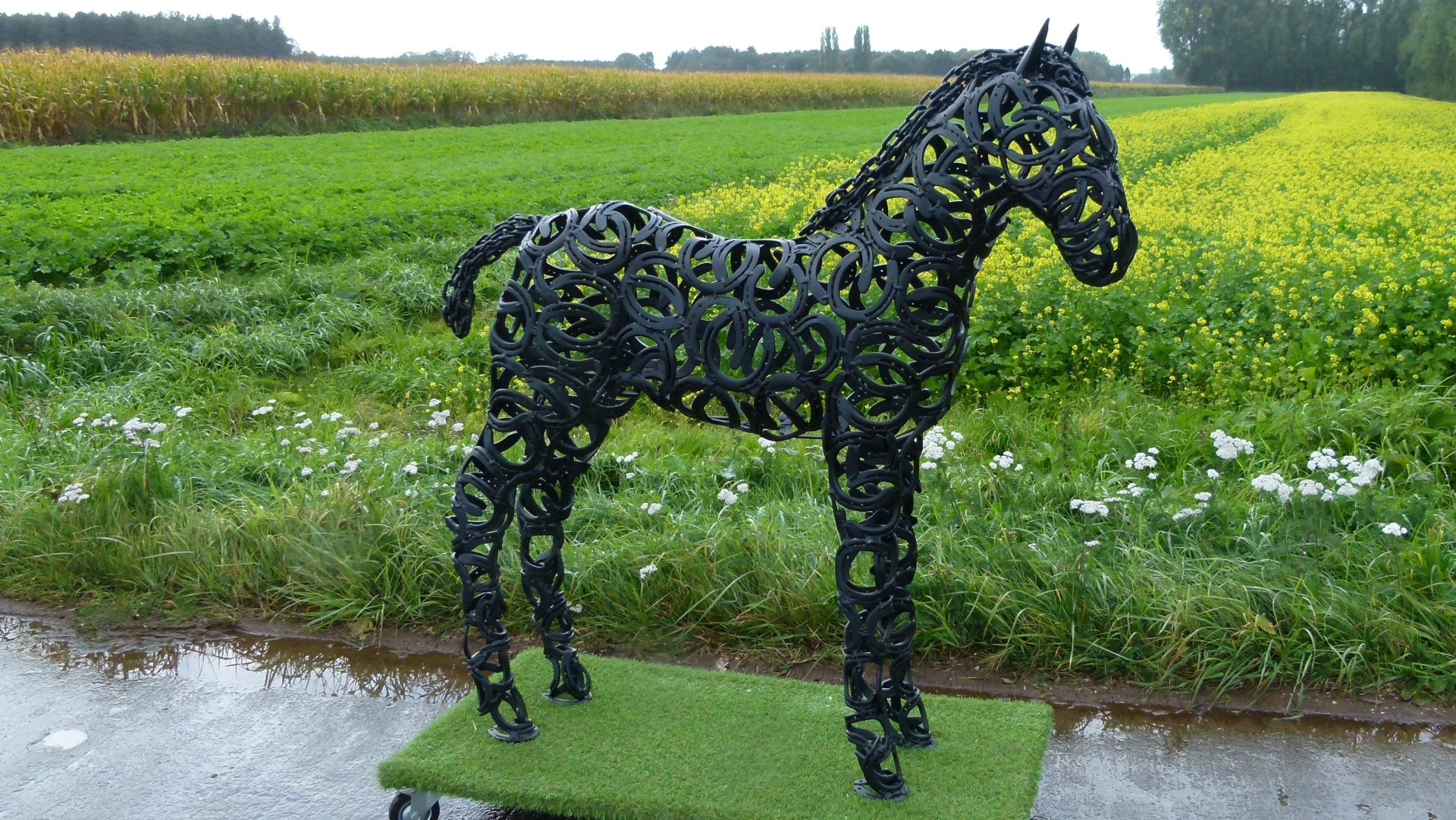 Foal - black coated - H 145cm