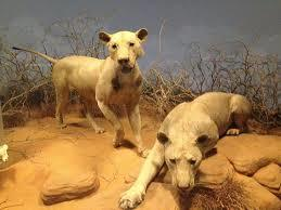 The Ghost and the Darkness: the Murderous Lions of Tsavo