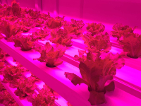 Hydroponic Growth Systems