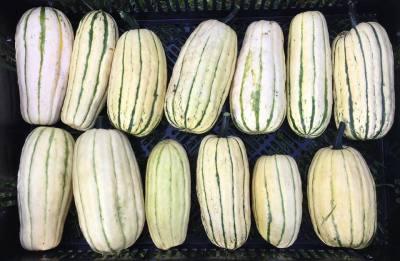 farmers-market-squash