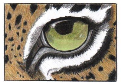 Jaguar Fall Newsletter