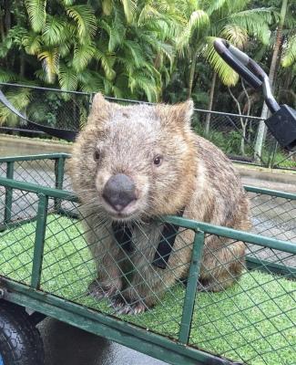 seriously....the australian zoo?