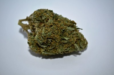Nirvana Cannabis strain on white backround with review
