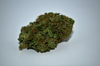 Cheese Quake Cannabis on white backround with Green Quality review