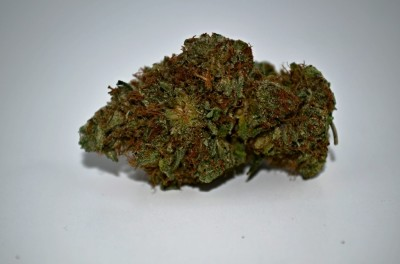 Gorilla Glue #4 Cannabis strain on white backround with Green Quality review