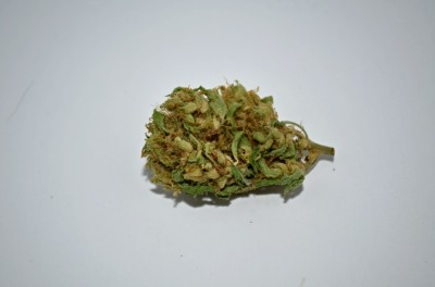 Mullumbimby Madness cannabis strain on white backround with green quality review