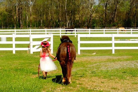 Little Girl and Pony Love Image