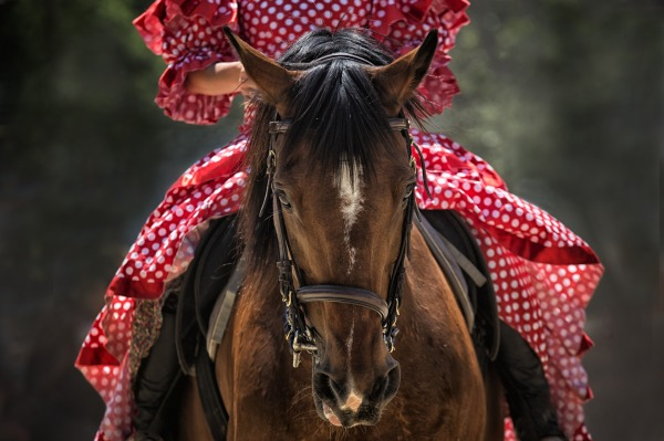 Woman riding Horse Image