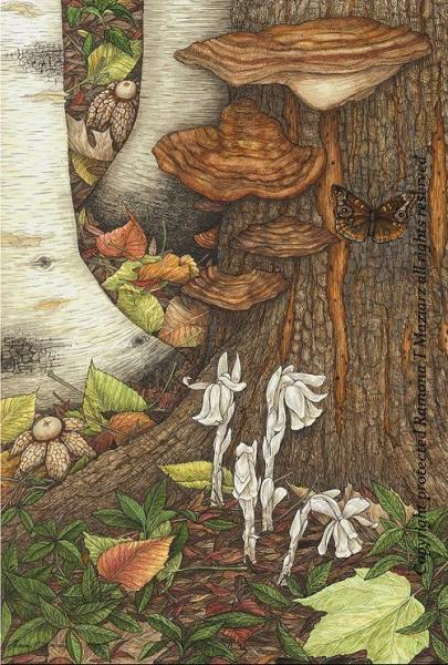 Indian Pipes & Earth Stars