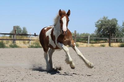 Eligible Foals