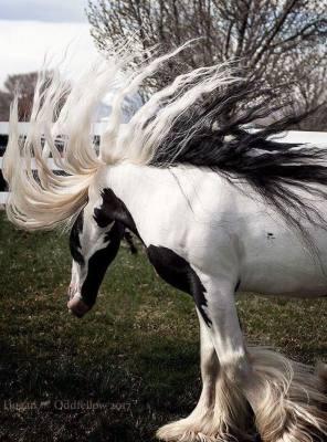 Enrolled Stallions