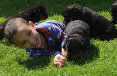 rottweiler puppies playing with grandson