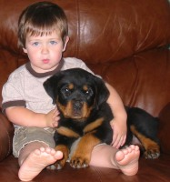 rottweiler sitting with a little boy