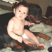 rottweiler sitting with baby