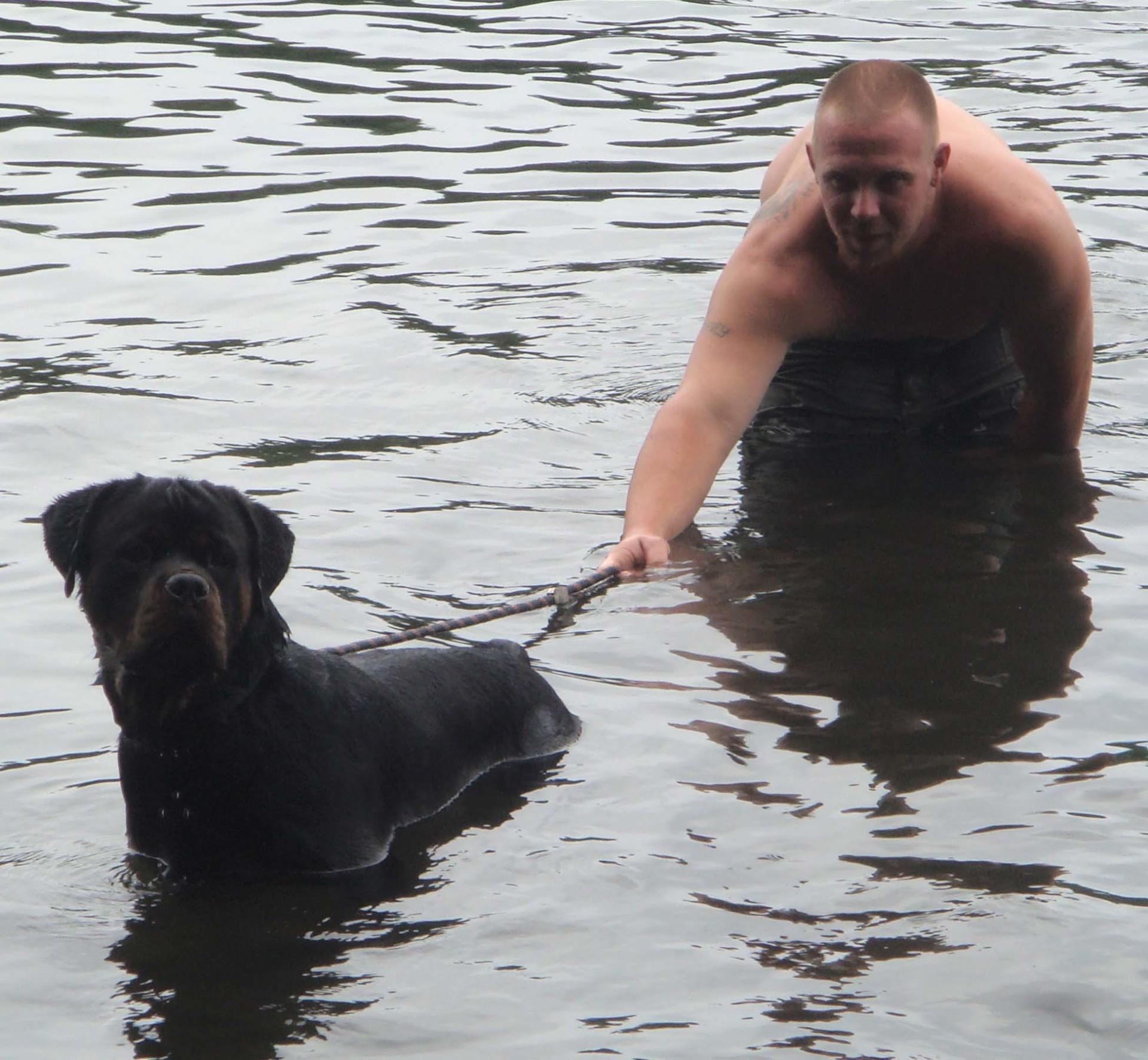 rottweiler swiming