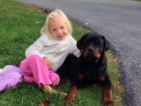 rottweiler sitting with little girl