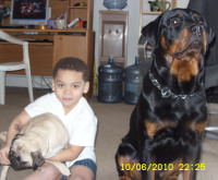 rottweiler with toddler