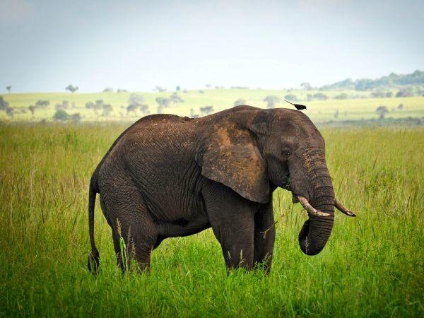 African WildLife Safaris