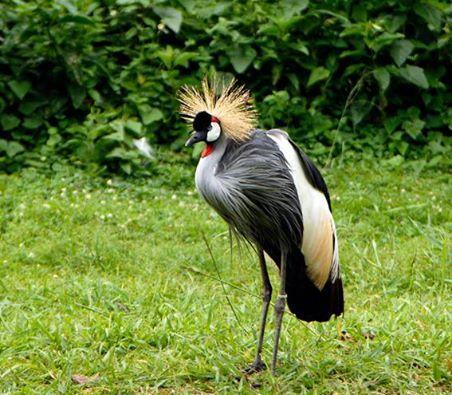 Bird Safaris