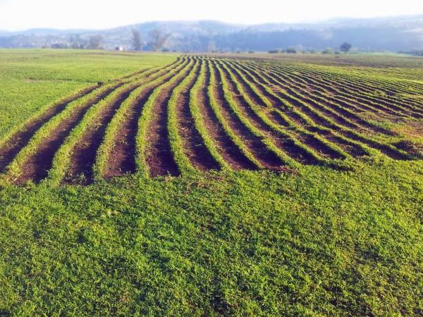 Berea field