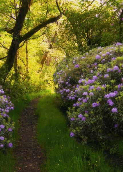 Enchanted pathway.