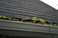 Gutter and Roof Cleaning in Bellevue WA