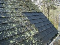 Bellevue Roof Cleaning