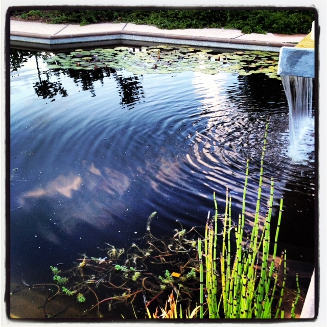 Pool to Pond -1