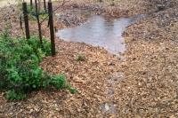 rainwater harvesting mulch basin
